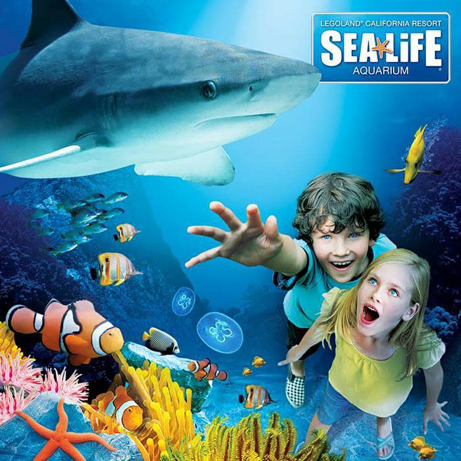 Book tickets to SEA LIFE Kansas City Aquarium online in advance to guarantee entry and save up to 15% off the door price!
